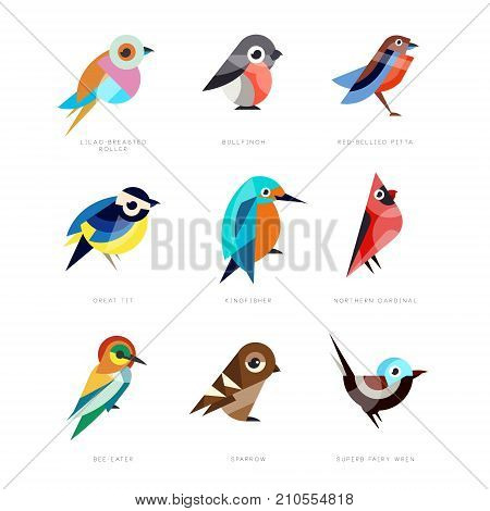 Different birds set, lilac breasted roller, bullfinch, red bellied pitta, great tit, kingfisher, northern cardinal, bee eater, sparrow, superb fairy wren vector Illustrations on a white background