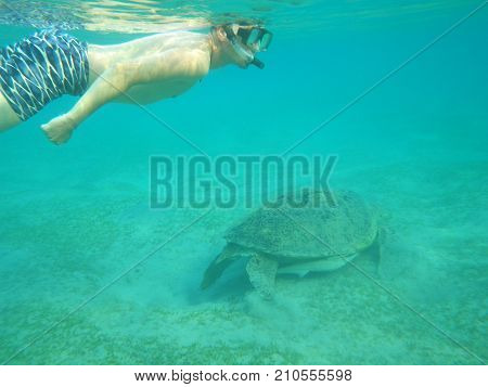 a man swims in the sea under water together with a large sea turtle