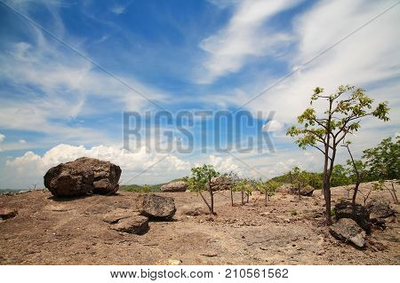 Forest Landscape At Sunny Day