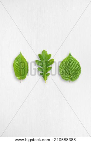 Green leaves on white wooden table with copy-space