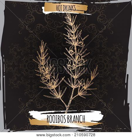 Rooibos aka Aspalathus linearis branches with leaves and flowers on black. Hot drinks collection. Great for cafe, bars, tea ads.