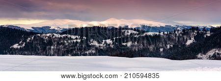 Panorama Of Borzhava Mountain Ridge In Winter