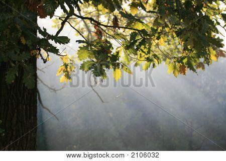 Autumn Sunbeams