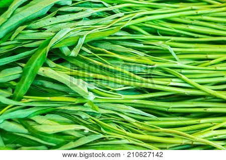 Close up Moring glory green vegetable in basket