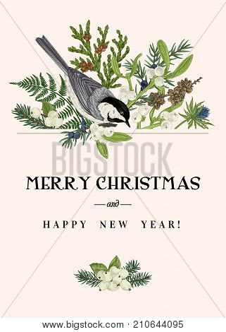 Christmas greeting card with a bird and winter plants. Fern spruce mistletoe larch thuja and titmouse. Botanical illustration. Vector. Colorful.