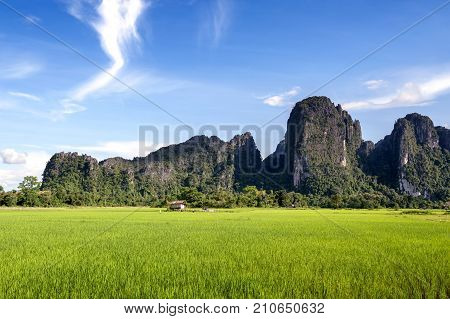 Green Rice Paddy Field And Limestone Mountains In Vang Vieng, Popular Tourist Resort Town In Lao Pdr