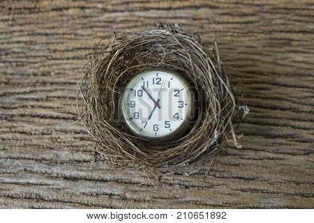 concept idea for business and real estate time to new bornimage of bird's nest with clock