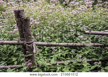Rural background from blossoming nightshade and fences of wooden logs.