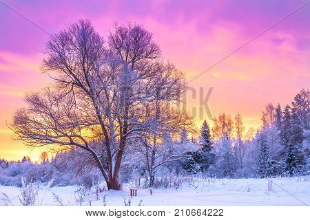 beautiful winter landscape with forest trees and sunrise. winterly morning of a new day. purple winter landscape with sunset