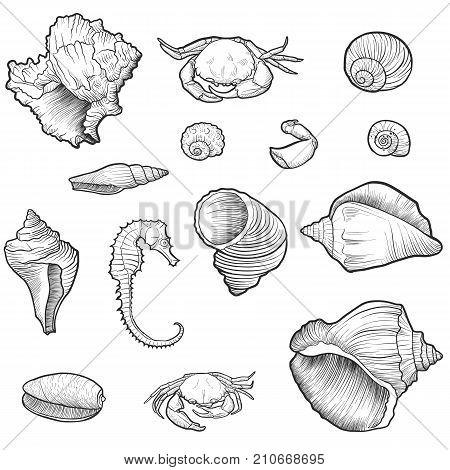 vector seashells, crabs, crab pincers, and sea horse, hand drawn illustration