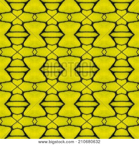 Background created from part of Golden Birdwing (Troides aeacus) butterfly wings texture showing minute scales
