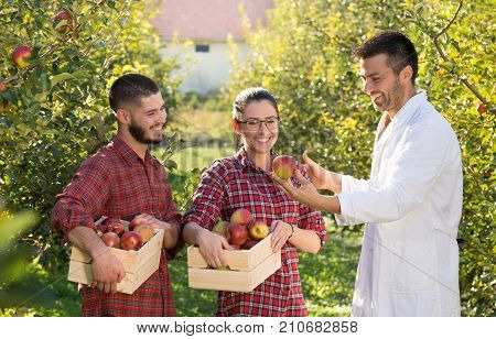 Agronomist And Farmers In Apple Orchard