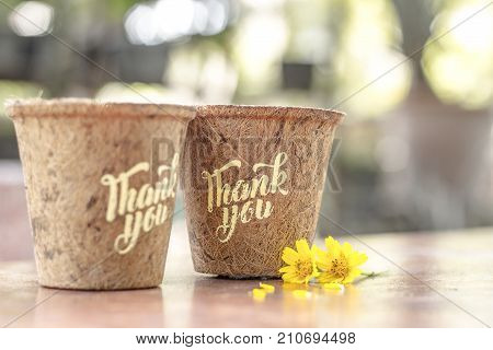 Give Thank you calligraphy on flowerpot and autumn with yellow blossoms on bokeh background in the garden. Free space for your own text for special day and holiday. Thankful concept,Thank giving day