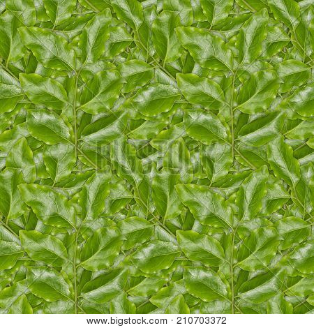 Seamless Background Of Green Leaves