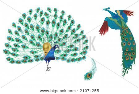 illustration with peacocks and feather isolated on white background