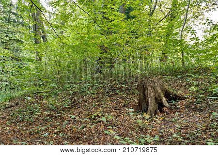 Tree stump on green grass in a mountain.