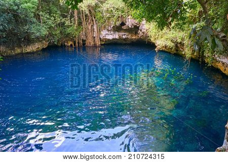 Cenote sinkhole in rainforest jungle of Riviera Maya at mayan Mexico