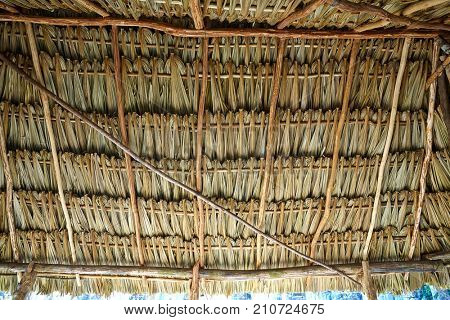 Mayan palapa ceiling roof detail with palm tree leaves Mexico