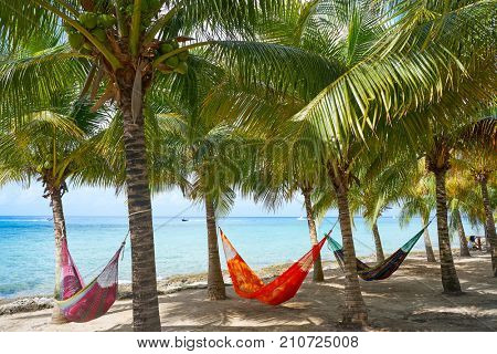 Cozumel island beach palm tree hammocks in Riviera Maya of Mexico