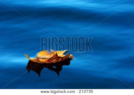 Leaf On A Water