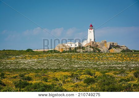 Paternoster lighthouse with a field of spring wildflowers in the foreground