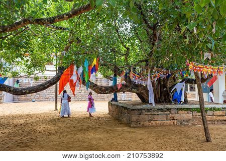 ANURADHAPURA, SRI LANKA - NOVEMBER 2013: View of important Buddhist tree growing near temple
