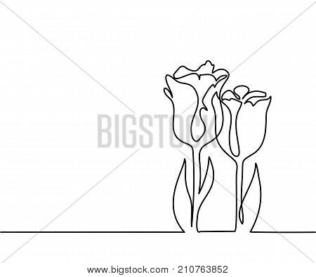 Beautiful flowers tulips. Continuous line drawing. Vector illustration