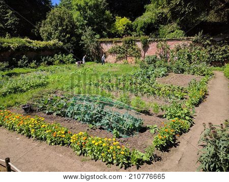 Orderly vegetable beds in a kitchen garden
