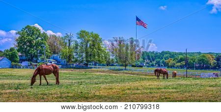 Horse stable in rural Maryland with horses grazing in a grassy field with an American flag flying in early Autumn