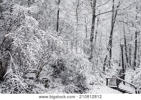 Fairy winter forest in the snow. Winter time. Heavy winter snow fall. Winter trees in the snow. Beautiful winter  landscape with snow. The trunks and branches of winter trees. Mountain winter landscape