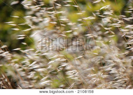 Grasses Wind 1