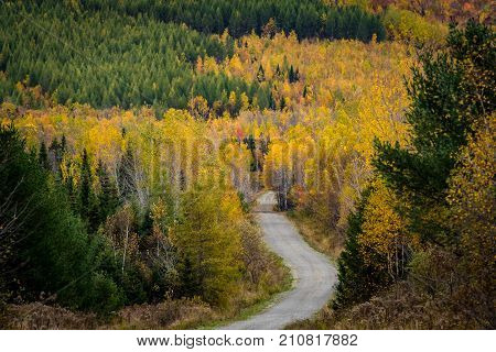 Dirt Road Through The Colorful North Woods Of Maine