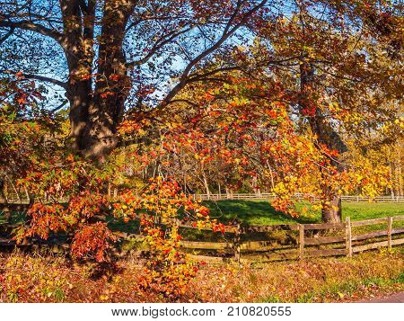 Blue sky and vibrant autumn colors in Upper Freehold New Jersey.