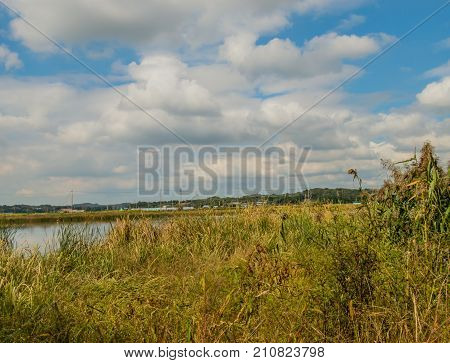 Landscape of riverbank covered with tall grass and reeds under blue sky full of white puffy clouds with a small farming community in the background.