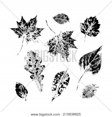 Set of autumn, fall leaves - oak, maple, birch - hand made ink print, stamp set, solated black and white vector illustration. Hand printed set of black and white leaves, fall, autumn symbols