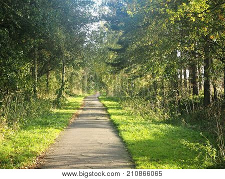 Footpath lined by grass verges and trees with dappled light near York, England