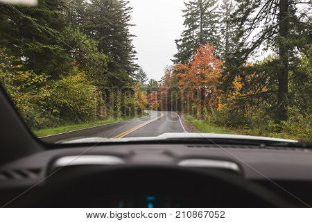 Autumn colors surround a curved road in the Pacific Northwest USA. Driver perspective inside a sportscar.