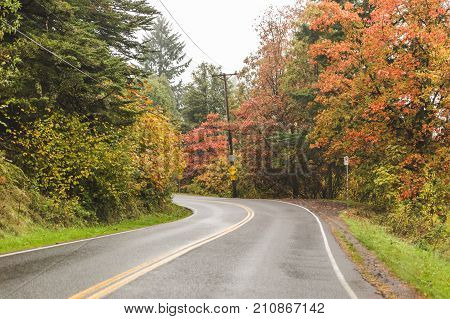 Autumn colors surround a curved road in the Pacific Northwest USA.