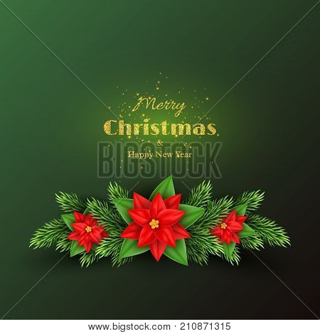 Christmas holiday background with fir-tree and poinsettia . Merry Christmas and happy new year. Vector illustration.