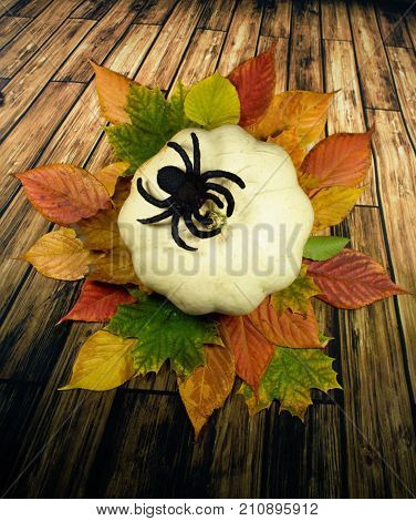 White pumpkin and colourful leaves with black spider/Halloween background - white pumpkin and green,red and yellow  autumn leaves on wooden background.