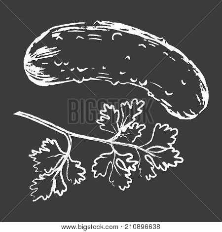 Cucumber and parsley white outline silhouettes on black background vector illustration. Vegetables drawn with chalk on blackboard.