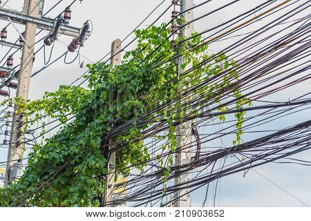 Messy Communication Cable And Electric Power Line Pole With Creeper Plants Problem Of Cabling Manage