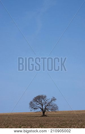 Tree horizon lonely landscape sky solitude loneliness poster