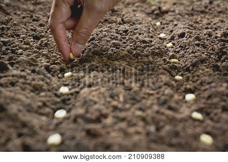 Seedling concept by human hand Human seeding seed in soil with plant.