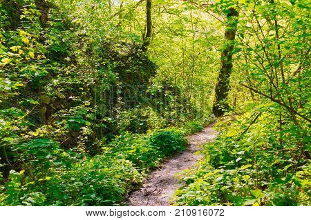 The trail surrounded by thicket of mountain forest in bright sunny day at summer