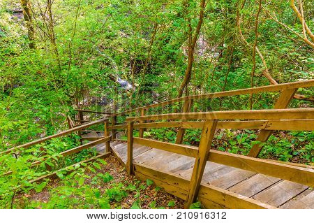 Wooden stairs and thicket in the park Berendeyevo Tsarstvo in sunny summer day Sochi Russia