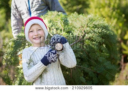 excited little boy in santa's hat carrying christmas tree with his father at farm winter holiday concept