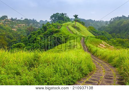 Stone footpath among bright colorful meadows with green grass on the hillside valley. Campuhan Ridge Walk, Ubud, Bali, Indonesia.