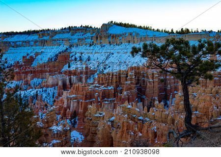 Gnarled rooted tree in the foreground with glorious Bryce Canyon with snow during sunset.