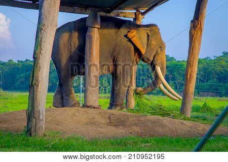 Chained elephant under a tructure at outdoors, in Chitwan National Park, Nepal, cruelty concept.